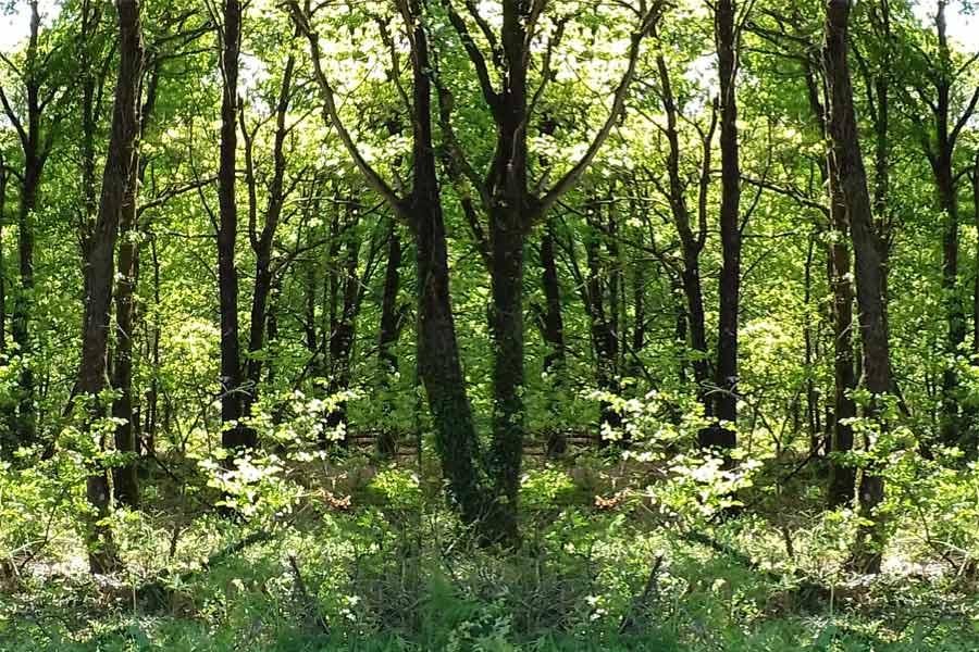 Séances dans la forêt de Brocéliande avec Caroline Tonoli, thérapeute par la voix et le son à Néant-sur-Yvel au coeur de la forêt de Brocéliande. Thérapie pour les femmes, les hauts-potentiels, les hypersensibles.